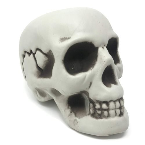 Figura Craneo Esqueleto